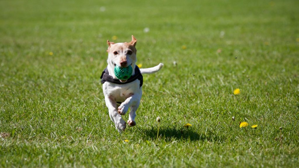 Ticks lurk in grass and vegetation and latch onto pets who carry ticks back into the family home.
