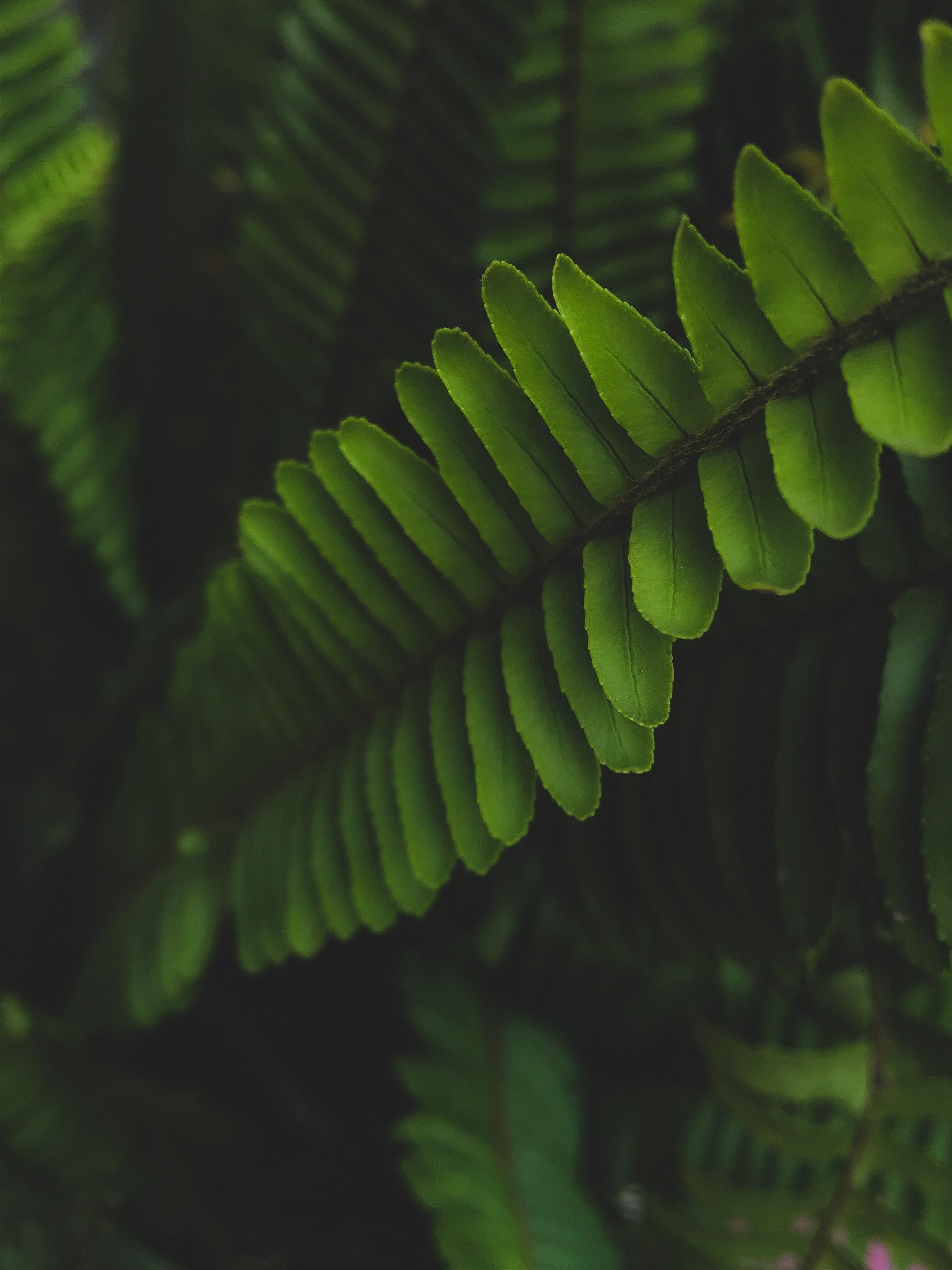 Tick lurk in dense vegetation
