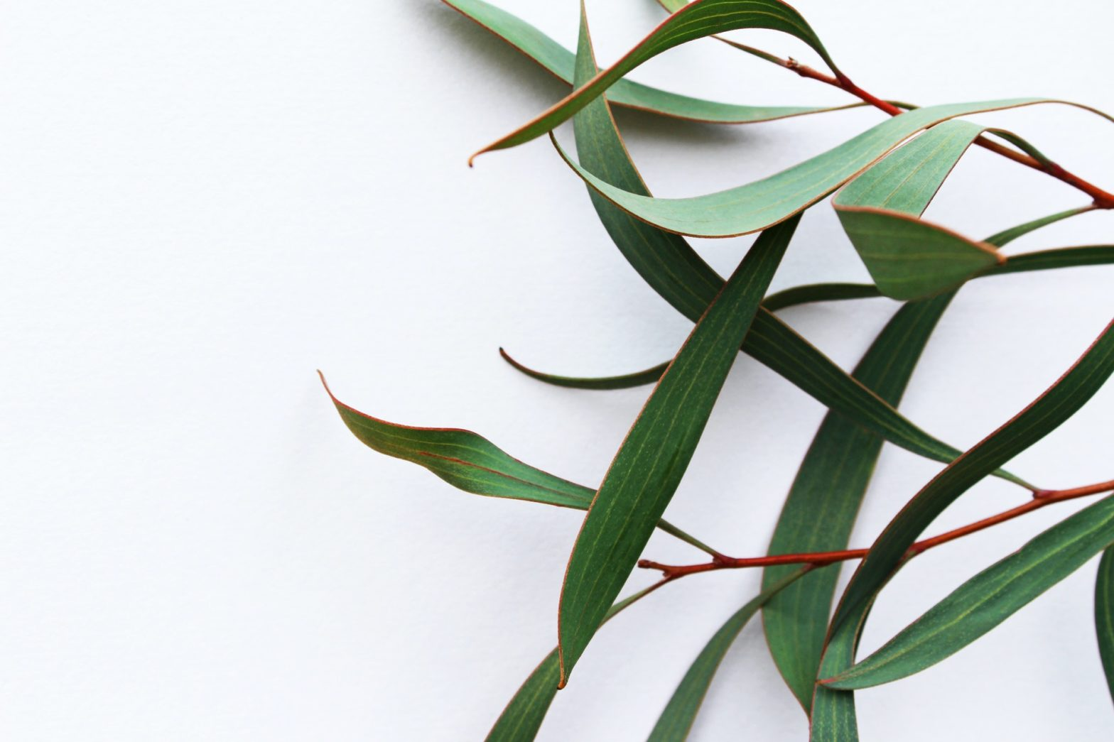 Botanic Protect tick repellent is derived from eucalyptus trees